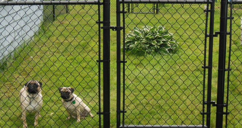 تولید فنس برای سگ
